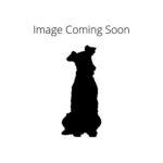 Petland Rockford Komondor