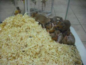 Small Animals - Visit us at Petland Fort Myers, Florida!