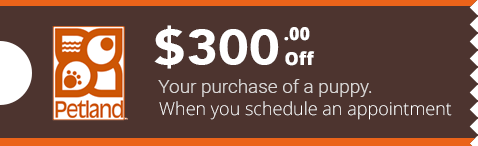 Appointment Coupon